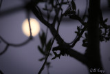 Moon in the Willows.jpg
