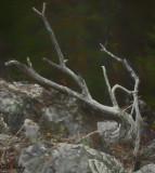 Driftwood-2.jpg