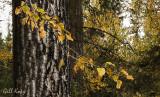 Fall leaves-10