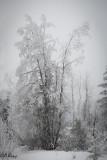 White on white.jpg