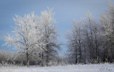 Frosted trees-4