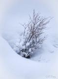 Snowy Bouquet.jpg