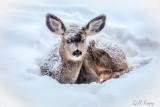 Snug deer
