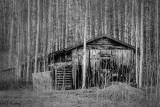 Forgotten_cabin2