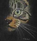 Cat - pastel on paper, 12 x 12          2017