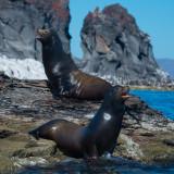 Sea Lions, Coronado Is. Loreto