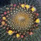 San Miguel de Allende / Botanical Gardens
