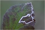 Mineervlieg - fam. Agromyzidae