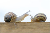 Slakken en ongewervelden - Snails , Slugs and others
