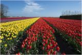 HOLLAND - Noord Holland
