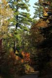 Pine Ridge Rd copy.jpg