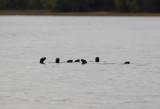 Otter clan copy.jpg