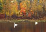 Arco_Lake_swans.jpg