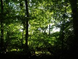 Woodland at Whitbarrow Village - 1
