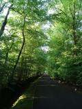 Woodland at Whitbarrow Village - 2