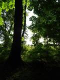 Woodland at Whitbarrow Village - 3