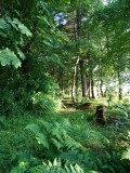 Woodland at Whitbarrow Village - 5