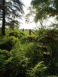 Woodland at Whitbarrow Village - 6