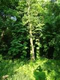 Woodland at Whitbarrow Village - 8