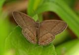 Butterfly-Zamora2.jpg