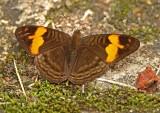Butterfly Manu Road.jpg