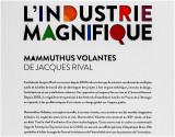 MAMMUTHUS VOLANTES