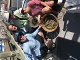Chesapeake Crabbing