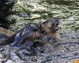OtterEelBarnabySlough051217.jpg