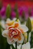 Tulips1_042018.jpg