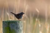 Sparrow010119.jpg