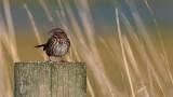 Sparrow010119_2.jpg