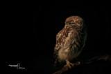 Little Owl-CASCINA SPINOLA