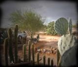 MORNING.On The Desert
