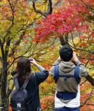 Fall in Hokkaido