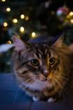 Kitten_Christmas