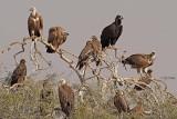 Rajasthan, India January 2018 Birding Trip.