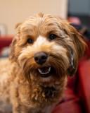 Smiling_dog_Bean_December_28_20180009.jpg