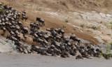 animals_of_masai_mara