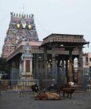 parthasarthy temple on S.Mada street DSCF5096.jpg