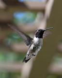 tiny_birds