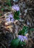 Siege Lane wildflowers