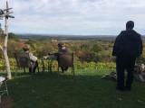 Benmarl Winery - IMG_0148.JPG