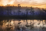 On Ladoga Swamps