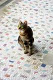Eternal Kitty in Villa Mistere , Pompeii