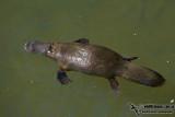 Echidna and Platypus