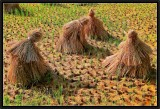 The Battle of Chanzicun Rice Fields. -1-