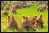 The Battle of Chanzicun Rice Fields. -2-