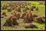 The Battle of Chanzicun Rice Fields. -3-