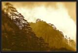 Entre pins, rochers et nuages...