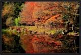 Reflets d'automne sur le Scorff.